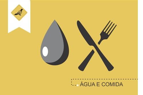 alimentar_pombos_crime_portugal_imagem_antipombos-pt