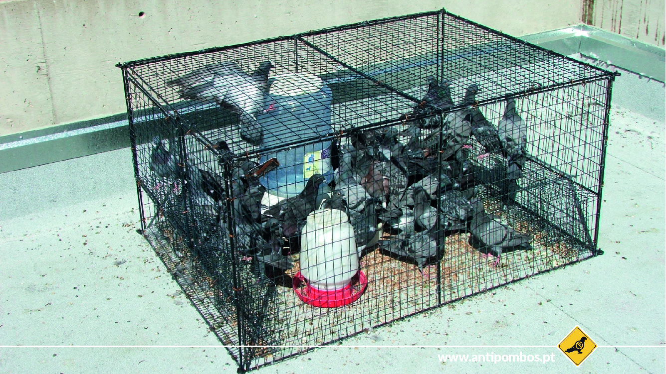 armadilhas-repelente-de-aves-antipombos.jpg